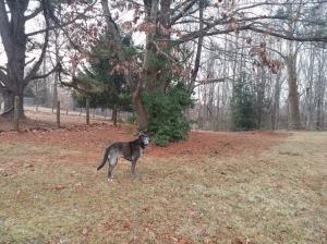 Liza on a morning walk