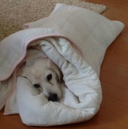 Old burrito dog